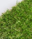 [Trávny koberec FUNgrass Bristol]